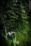 hulk grass leaves
