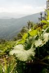 plant farm hills