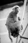 monkey mother child