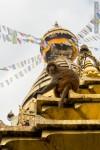 monkey looking at camera