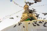 swoyambhu pigeons flying